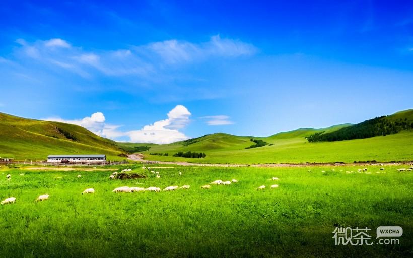 草原风景微信图片 蓝天白云