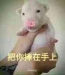 骚粉猪表情包图片
