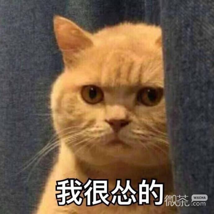 咖喱橘猫表情包图片