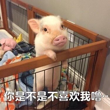 可爱猪猪微信表情包