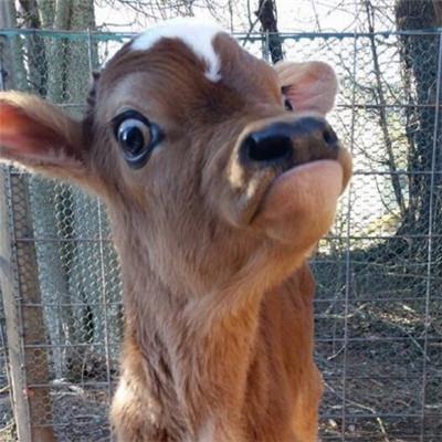 萌萌哒宠物微信头像图片_激萌可爱的宠物头像图片_微