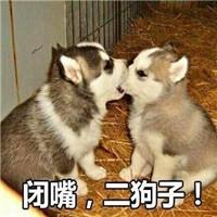 淫荡的公狗_可爱淫荡的狗狗微信带字表情包