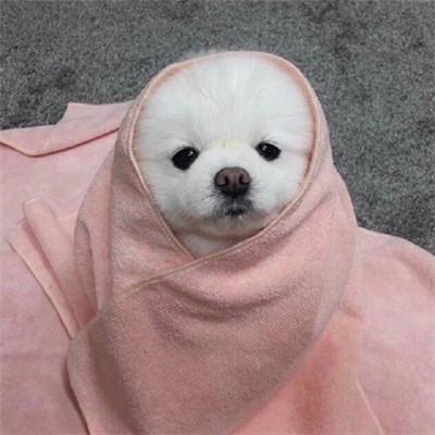 萌萌哒的双十一单身狗微信头像_可爱搞怪单身狗头像