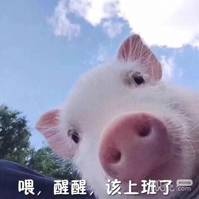 萌萌哒的小猪佩奇起床语录微信表情包下载