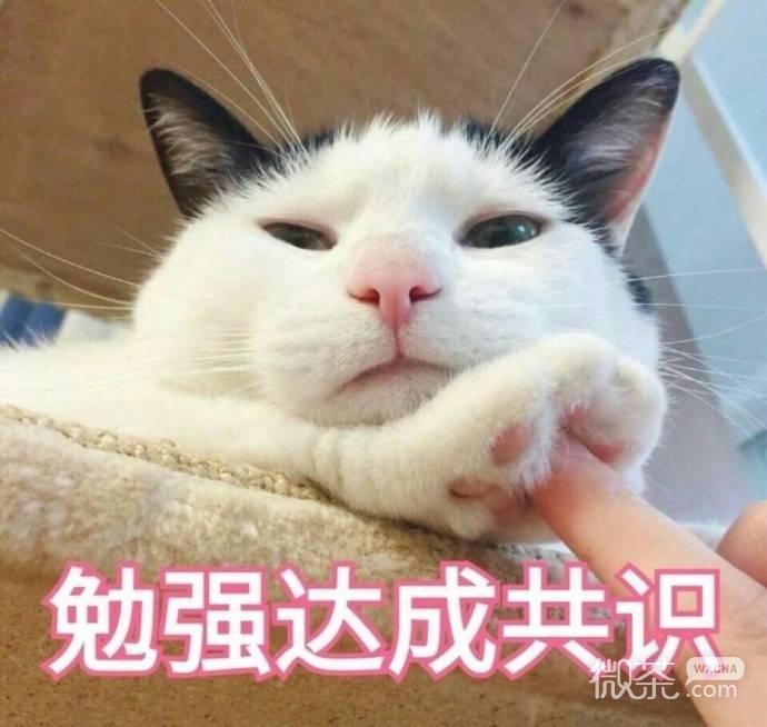 可爱萌萌哒的微信喵星人带字表情包合集下载