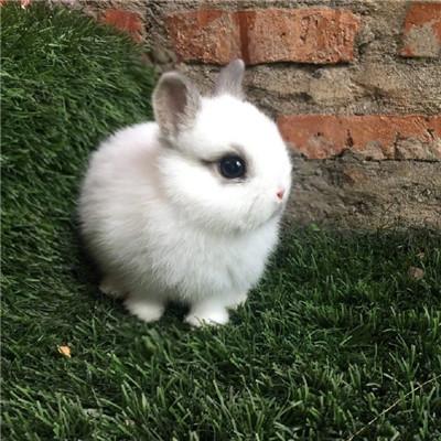 可爱激萌小白兔微信头像套图下载_可爱呆萌小白兔微信