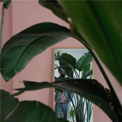 清新养眼微信绿色植物系列头像下载