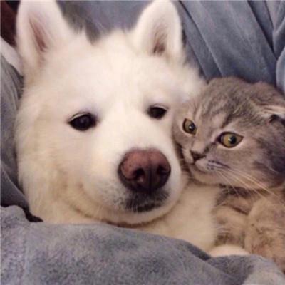 萌萌哒的宠物系列微信情侣头像下载