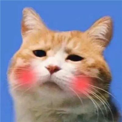 可爱萌系宠物系列微信情侣头像下载