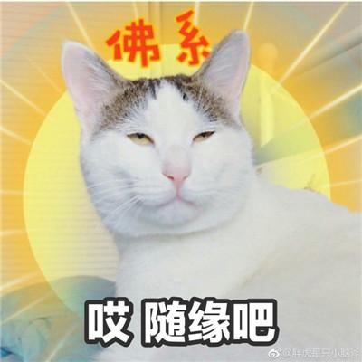 可爱爆笑微信佛系女子专用头像下载_萌萌哒的佛系女子