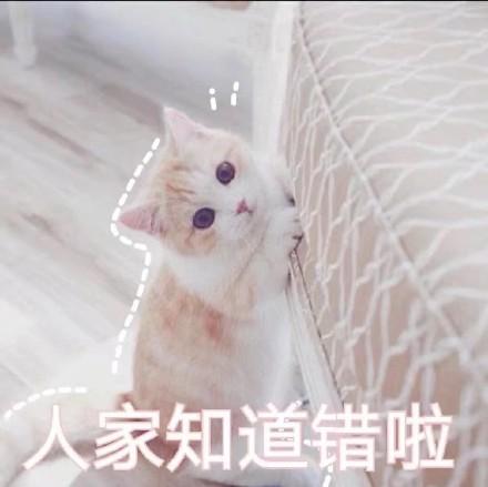 可爱激萌微信喵星人带字表情包合集下载