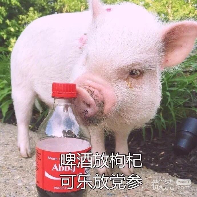 可爱搞笑精致小猪猪系列微信表情包下载
