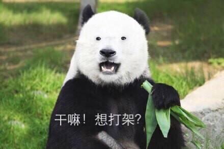 微信爆笑恶搞熊猫表情包套图合集下载_可爱萌系微信包