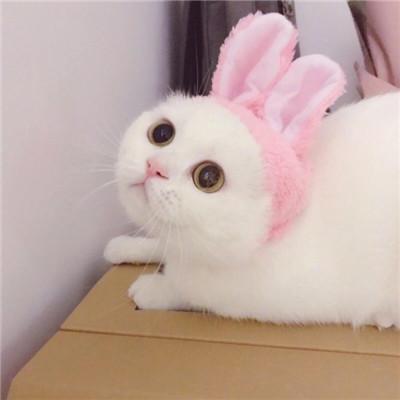 可爱萌萌哒的微信最新萌宠情侣头像合集下载