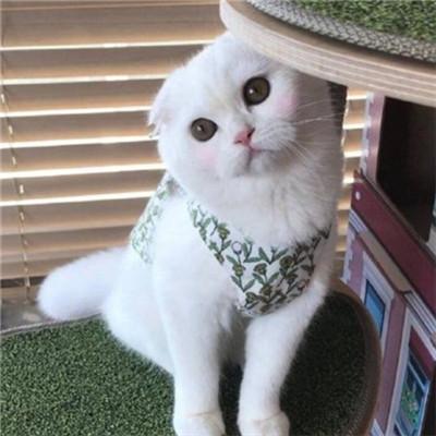 可爱萌萌哒的微信招财喵星人头像套图下载_可爱俏皮喵