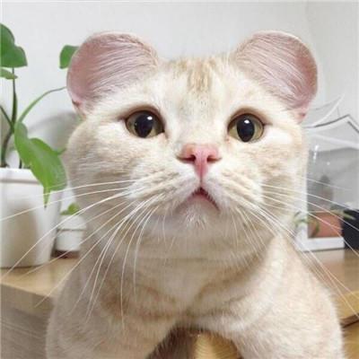 2018微信最新招财喵星人表情包合集下载