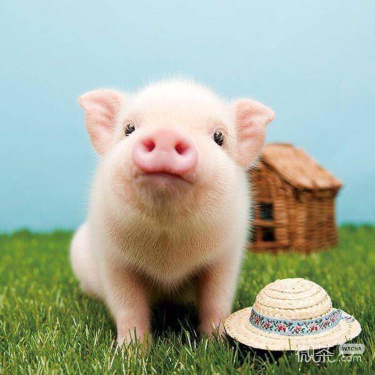 可爱的微信动物头像图片大全 小孩图片头像可爱微信