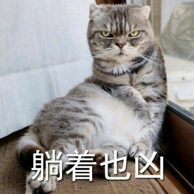 银河系最凶猫咪表情包头像_微信头像_微茶网