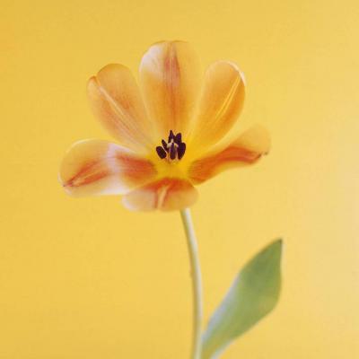 花朵微信头像