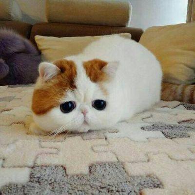 微信猫咪可爱头像