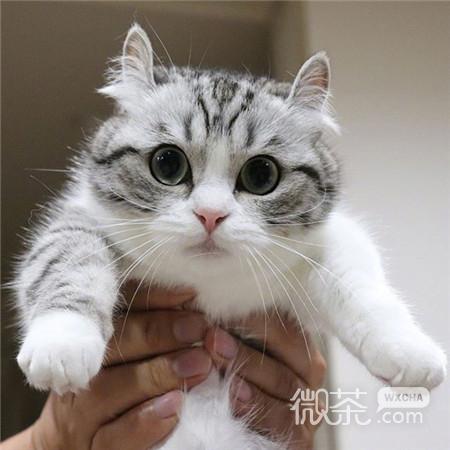 2018可爱猫咪微信朋友圈背景图大全超高清