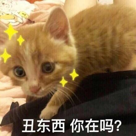 微信超可爱猫咪表情包