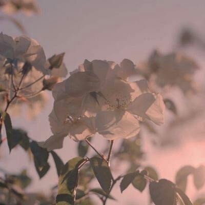 微信唯美个性意境风景静物头像