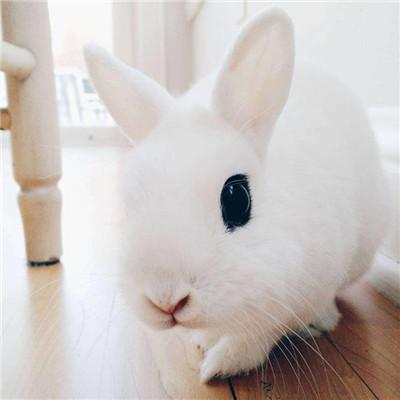 微信最新可爱兔子头像
