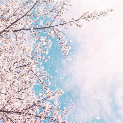 微信唯美好看樱花风景静物头像