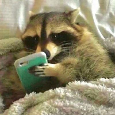 可爱沙雕的微信搞笑动物头像